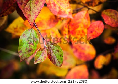 Fall season nature background. Bright colorful autumn leaves, macro photo with selective focus - stock photo