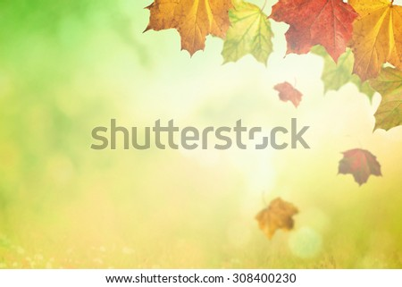 Fall season on sunny background - stock photo