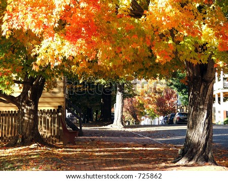 Fall Street in Old Salem
