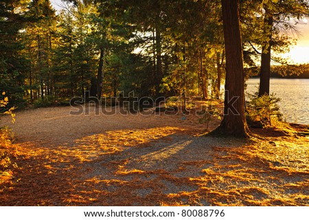 Fall trees and clearing at sunset near Lake of Two Rivers in Algonquin Park, Ontario, Canada