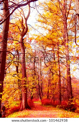 Fall Wallpaper Forest Landscape - stock photo