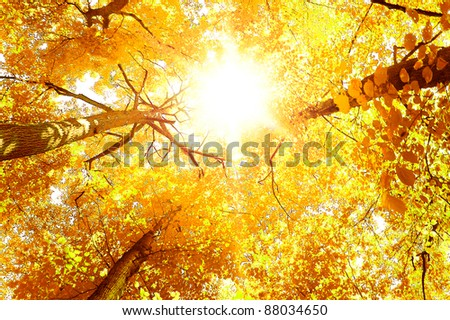 Fall Wallpaper Idyllic Nature - stock photo
