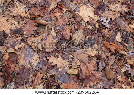 Fallen Autumn Leaves and Pine Needles on the Ground After the Rain - stock photo