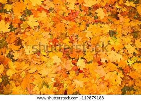 fallen autumn leaves as a background - stock photo