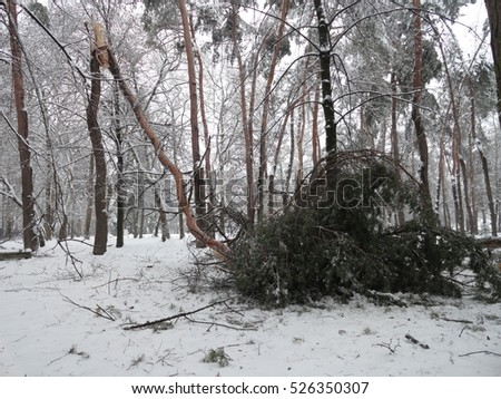 Fallen branches because of the weight of snow