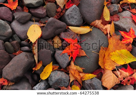 Fallen, colorful autumn leaves laying on rocks by stream bed - stock photo