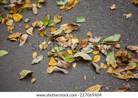 Fallen colorful autumnal leaves lay on the urban asphalt road. Selective focus - stock photo