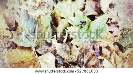 Fallen Colorful leaves on the ground in the Autumn or Wiinter in retro blackground.