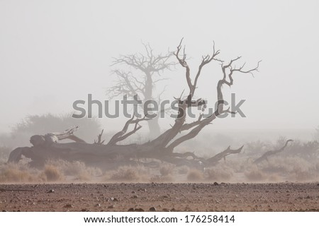 fallen desert tree in front of a white sand storm, Namib, Naukluft Park, Namibia, Africa - stock photo