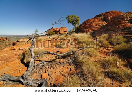 Fallen dry trunk at Kings Canyon,  Northern Territory, Australia - stock photo
