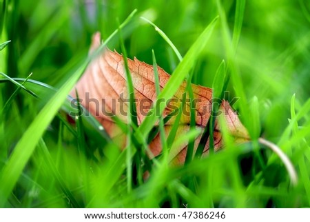 fallen leaf in grass