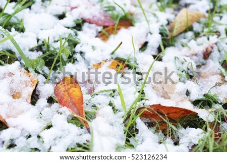 Fallen leaves and grass in snow at the park of Tokyo in winter.