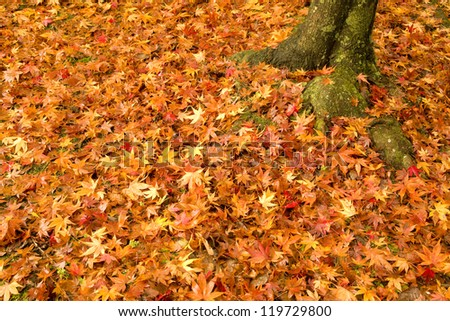 fallen leaves and tree - stock photo
