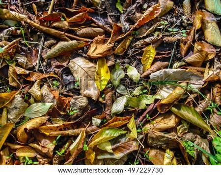 Fallen leaves background texture
