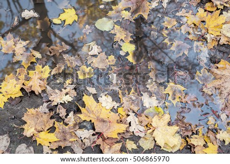fallen leaves in a puddle, background