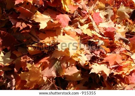 Fallen leaves in Autumn - stock photo