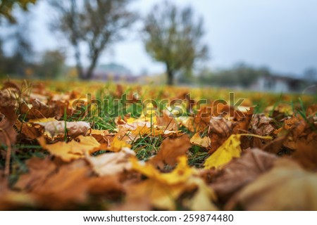 Fallen leaves in autumn city park. - stock photo