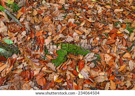 Fallen leaves in the autumn forest - stock photo