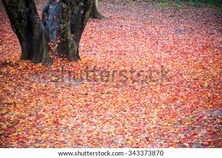 fallen leaves of the maple tree,  autumn colors background - stock photo
