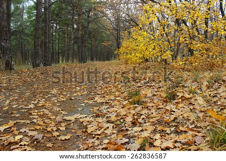 Fallen leaves on a forest road in autumn