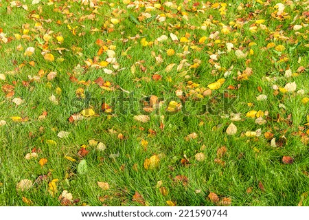 fallen leaves on a green grass.  - stock photo