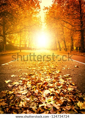 Fallen Leaves on a street in London - stock photo
