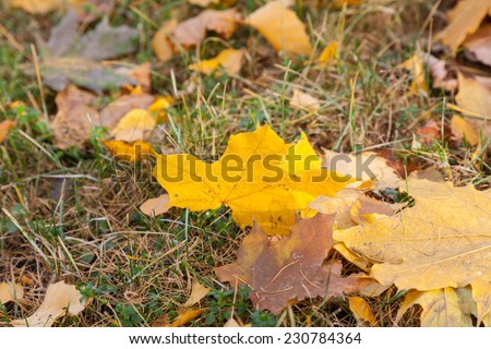 Fallen leaves on the grass - stock photo