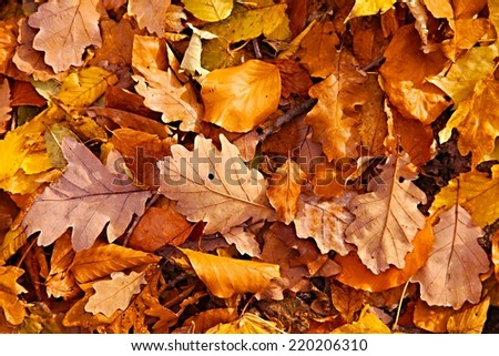 Fallen leaves on the ground - stock photo