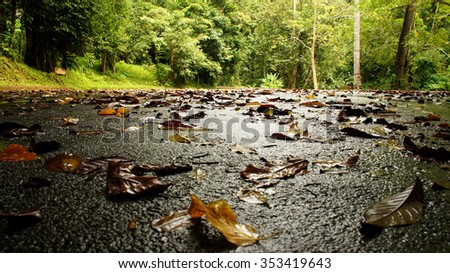 Fallen leaves on wet ground after rain