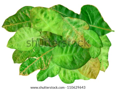 fallen  leaves  on white background