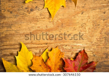 fallen maple leaves on wood, autumn concept - stock photo