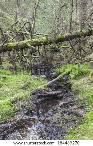 Fallen old moss covered spruce tree over a creek - stock photo