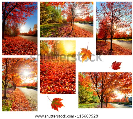 Fallen red maple leaves on a quiet road on an autumn afternoon - stock photo