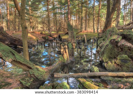 Fallen, rotting trees fill a small pond in a forest - stock photo