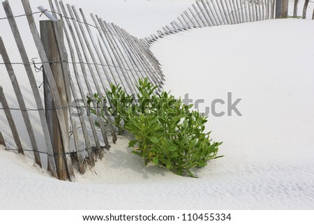 Fallen snow fence on white sand with accent of beach plant.  Location is New Jersey Shore, on dunes of Island Beach State Park, an attraction with trails, swimming, birding, fishing, and hiking. - stock photo