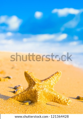 Fallen Star After the Storm - stock photo