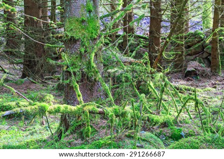 Fallen tree covered with green moss in the forest