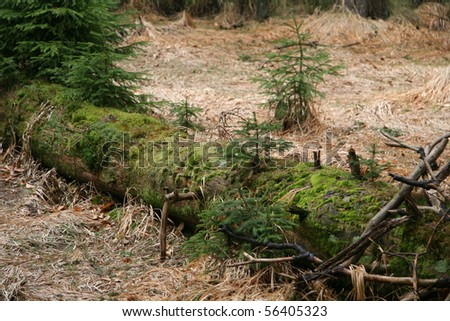 Fallen tree, covered with moss and small trees