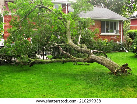 Fallen tree due to storm or hurricane damage in backyard of suburban home - stock photo