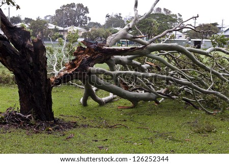 Fallen tree during cyclonic wind in South-East Queensland, on January 26-28, 2013 - stock photo
