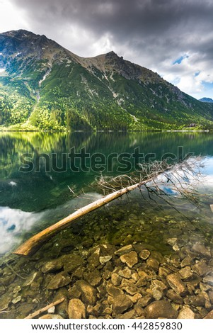 fallen tree in alpine lake, with perfect mountains reflection on surface. Tatra National Park,Poland. - stock photo