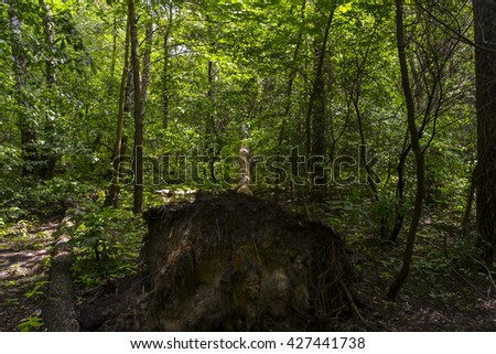 fallen tree in the forest