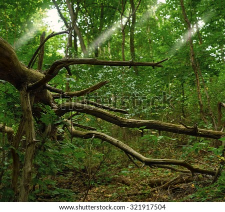 fallen tree in the green forest