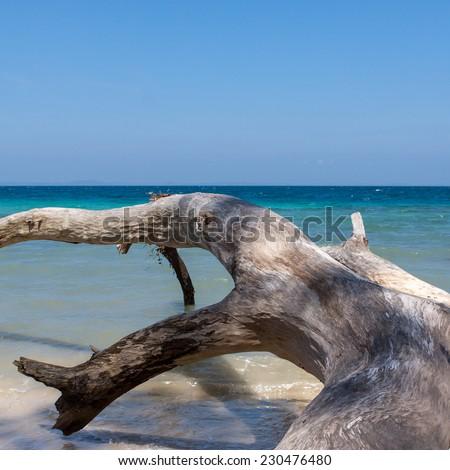 Fallen tree on Havelock Island beach, Andamans, India - stock photo