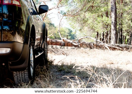 Fallen tree on the way a big black car in the woods - stock photo