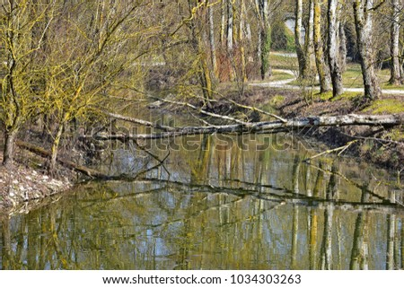 Fallen tree reflecting in a river