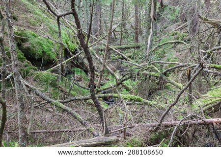 Fallen trees in a chaotic old primeval forest