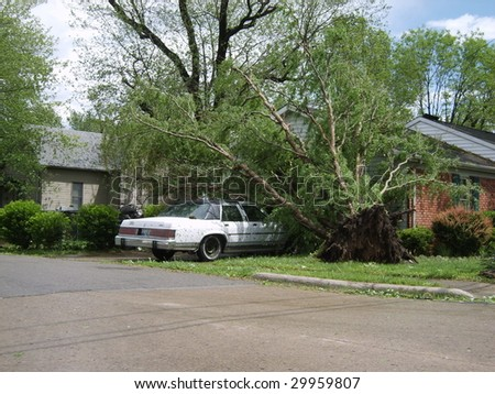 Fallen trees on a car in the driveway. - stock photo