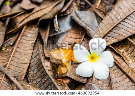 Fallen white flower on brown leaves