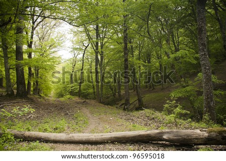 Fallen wooden trunk blocking the dirt road in a lush green spring forest - stock photo